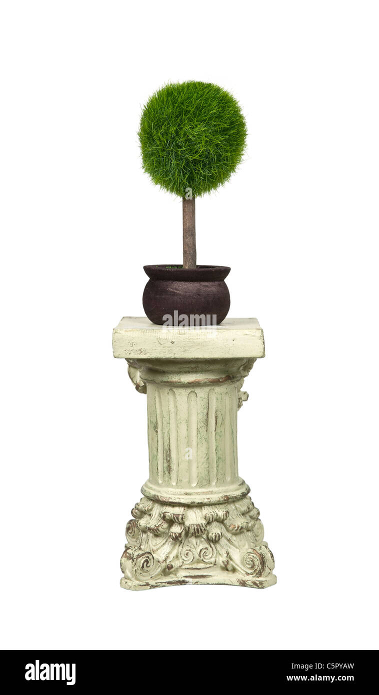 High regard for nature shown by a potted tree on a stone formal pedestal for raising up an item of importance - - Stock Image