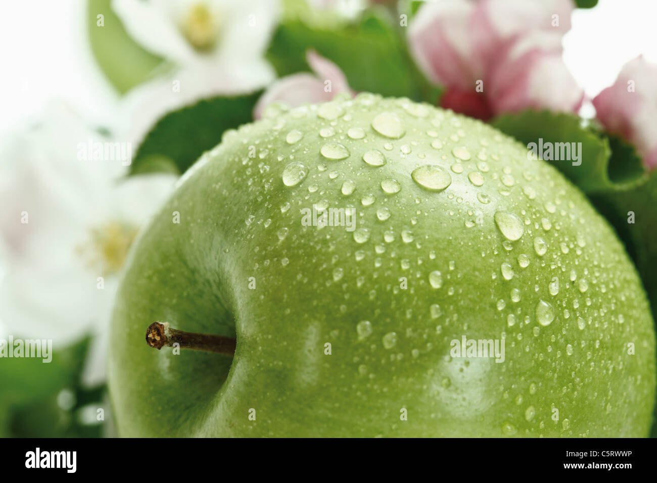Green apple with water droplets, in background apple blossom, close-up - Stock Image