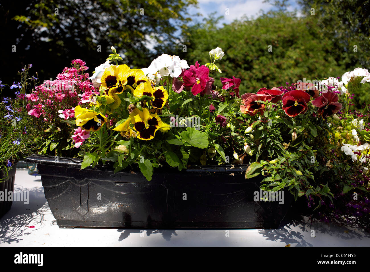 Beautiful colourful display of flowers on the roof of a narrowboat on the Trent and Mersey Canal during the 2011 - Stock Image