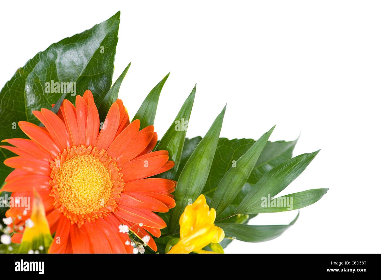 Wedding Flowers Freesia And Gerbera Daisy Stock Photo 38398216 Alamy