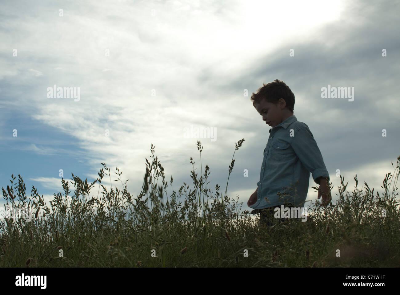 Boy walking through tall grass - Stock Image
