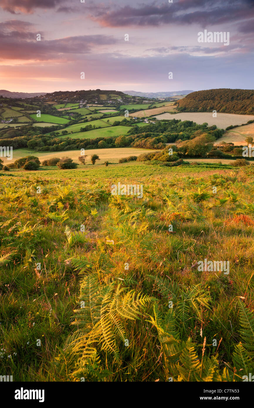 Rolling Dorset countryside viewed from Golden Cap, Dorset, England. Summer (July) 2011. - Stock Image