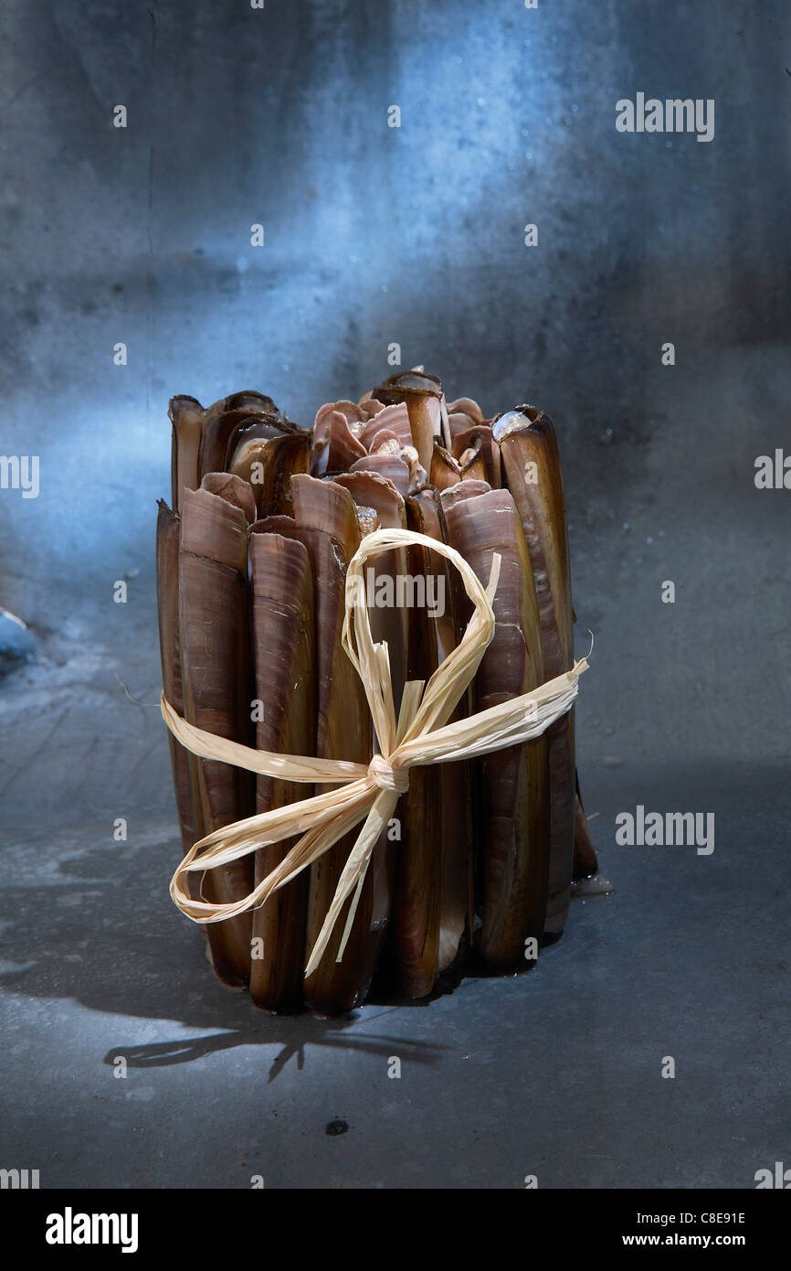 Bundle of razor clams - Stock Image