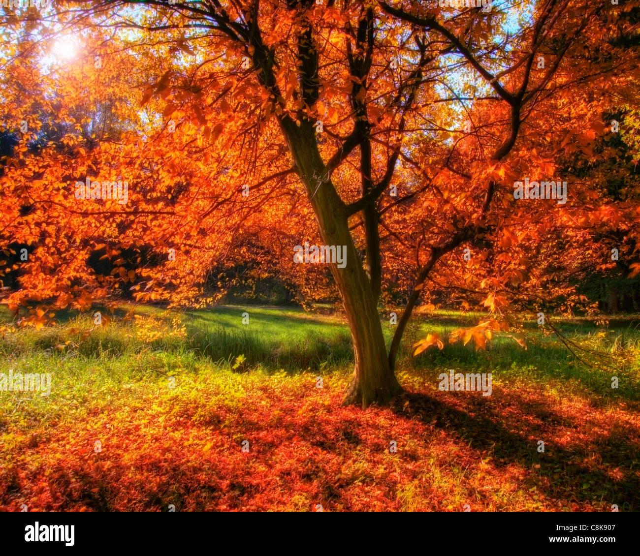 DE - BAVARIA: Autumn in Nymphenburg Castle Park, Munich - Stock Image
