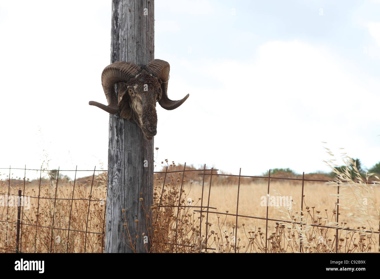 It is not unusual to find a goat skull with horns placed on fences ...