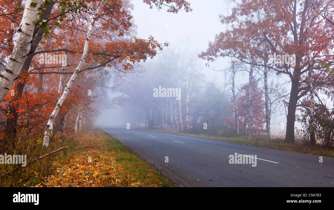 Forest road in a foggy autumn day. - Stock Image