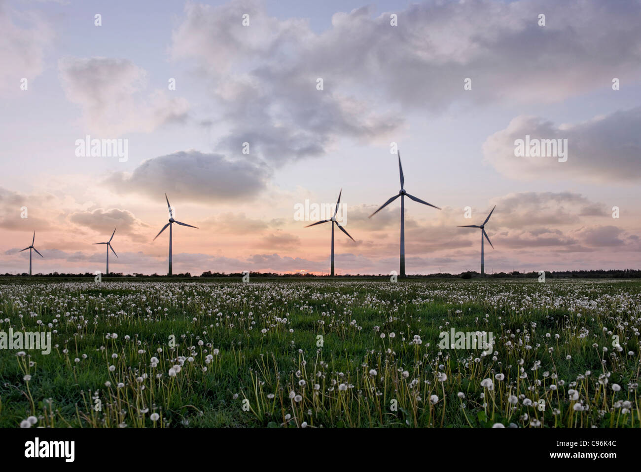 Wind Turbines, Silhouette of windturbines in sunset, wind power plant, fields, wind farm - Stock Image