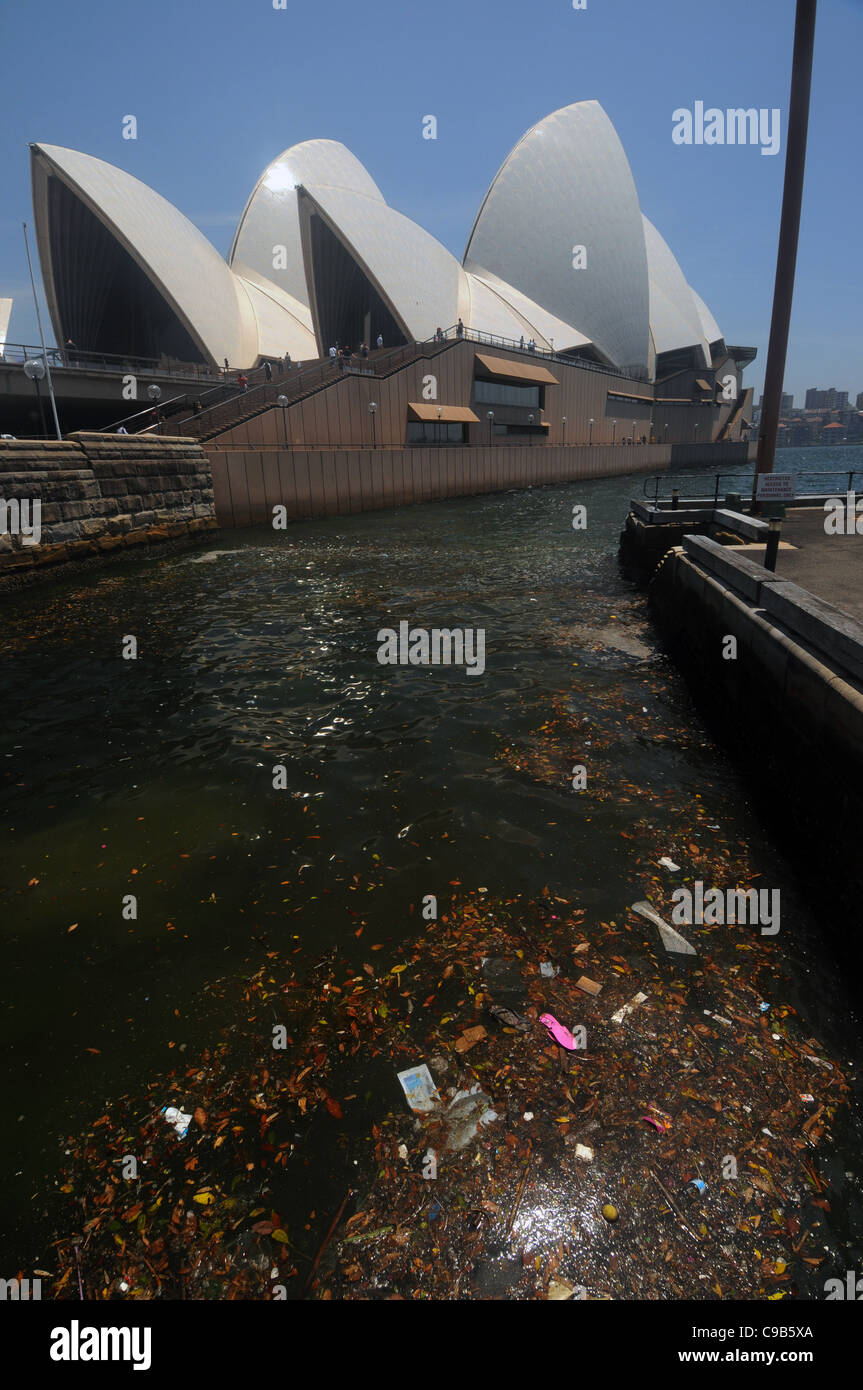 rubbish-floating-in-sydney-harbour-near-
