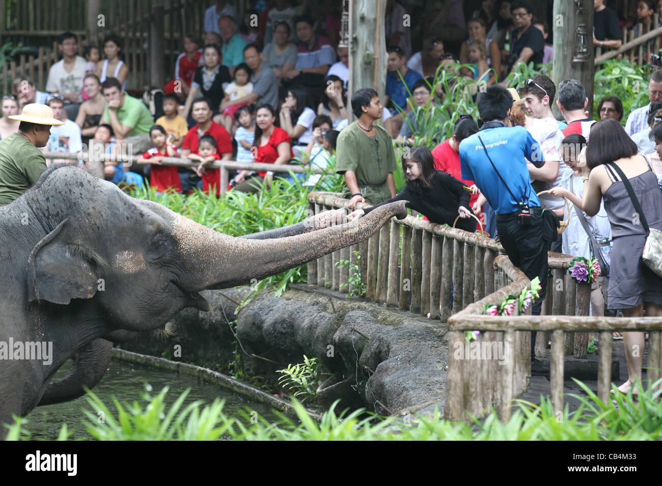 Girl Feeding Elephants A Banana At The Singapore Zoo Stock Photo