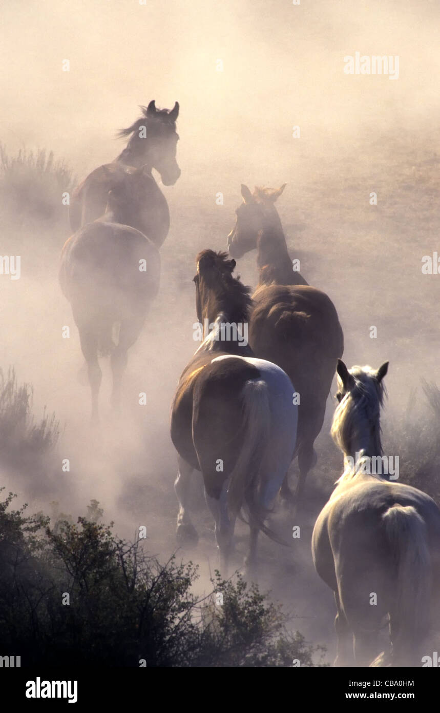 Horses stampeding, enveloped in dust. - Stock Image