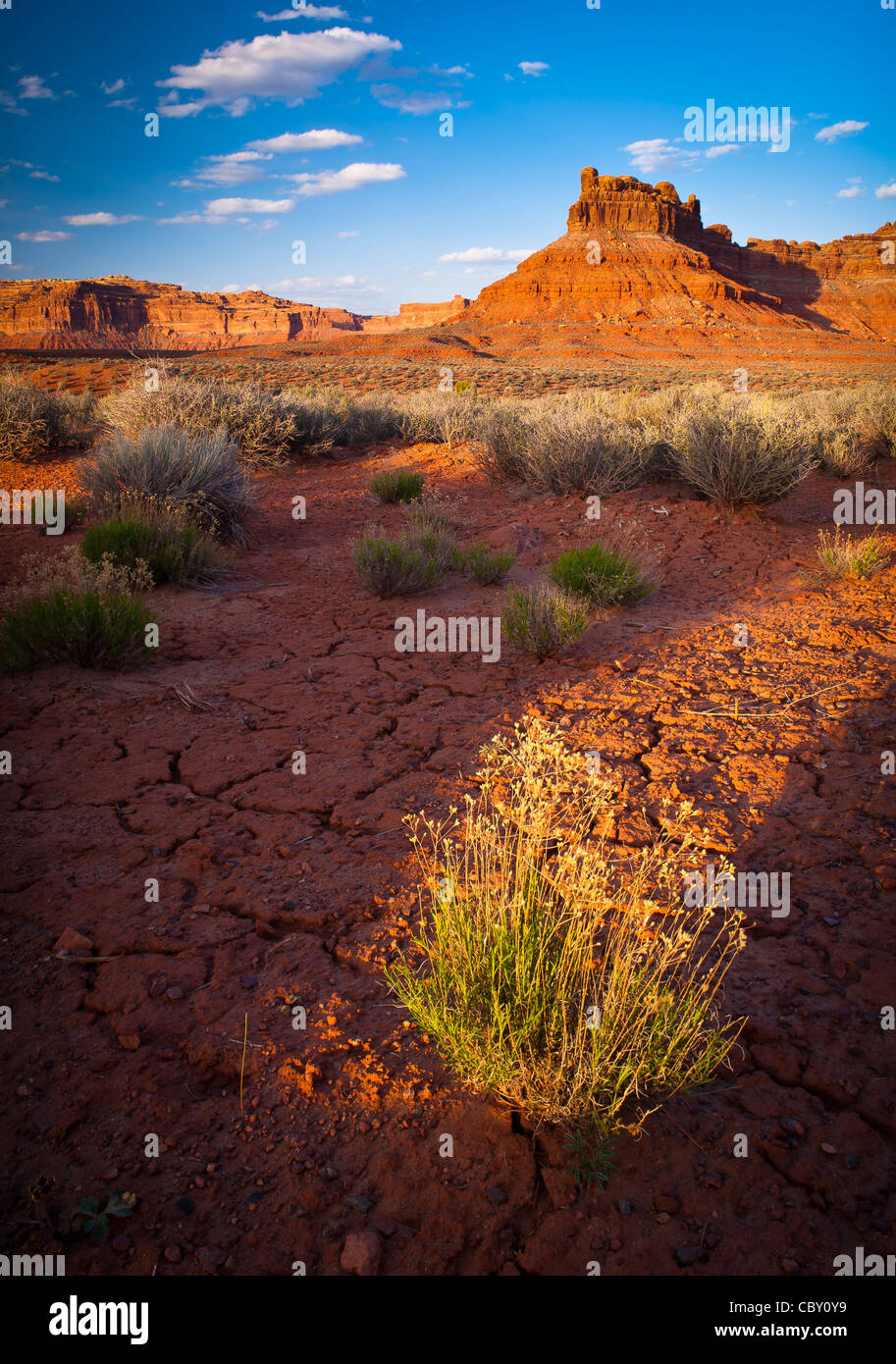 Cracked earth and bushes in Valley of the Gods, Utah - Stock Image