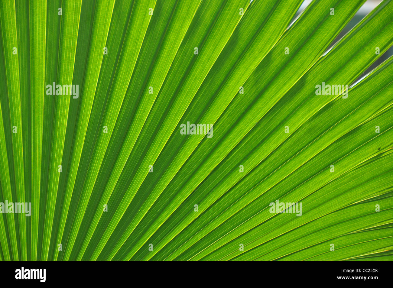 Fresh green leaf - Stock Image