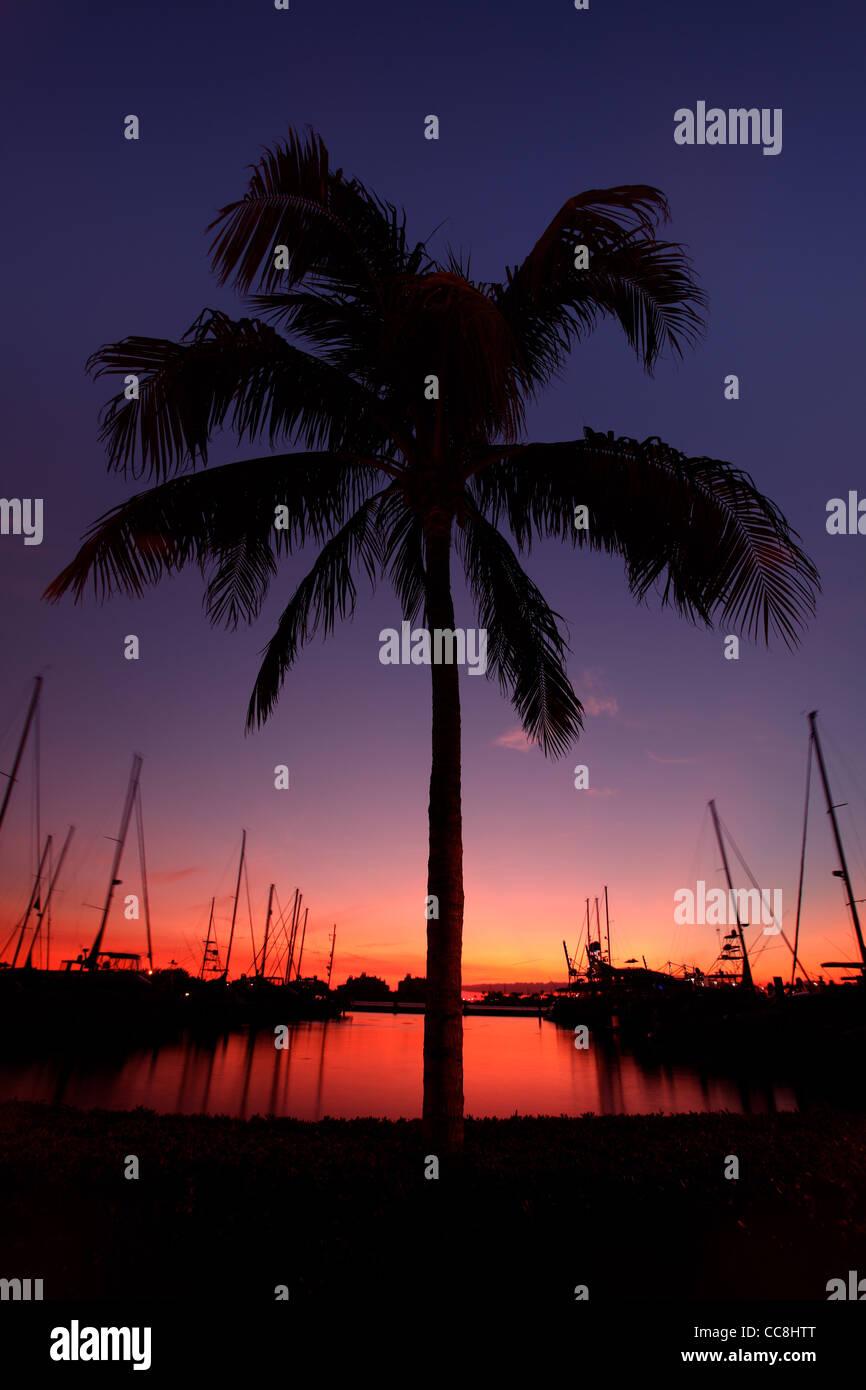 Miami Palm Tree Silhouette at Sunset - Stock Image