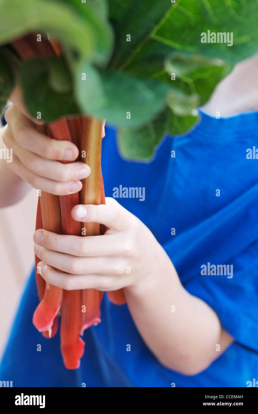 Young child holding freshly picked organic rhubarb from his garden. Perfect ingredient for a healthy, homemade pie! - Stock Image