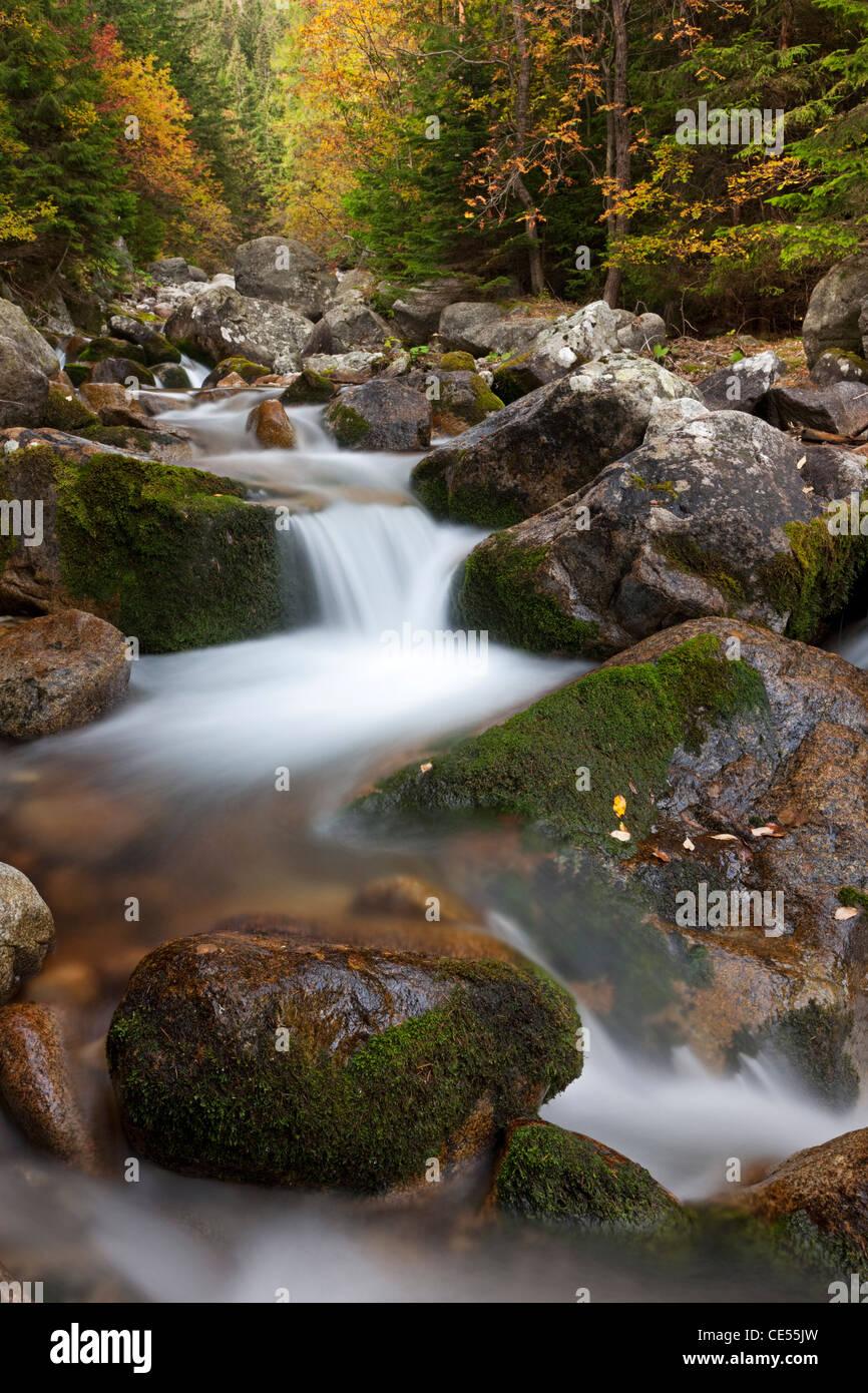 Rocky mountain stream through woodland, Tatra Mountains, Slovakia, Europe. Autumn (October) 2011. - Stock Image