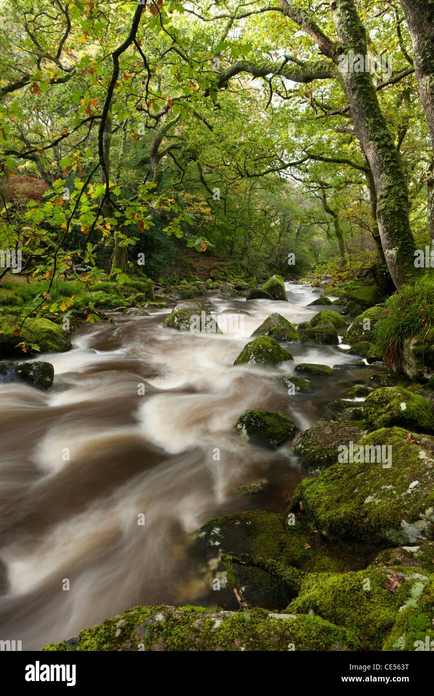 River Plym flowing through Dewerstone Wood, Dartmoor, Devon, England. Autumn (October) 2011. - Stock Image