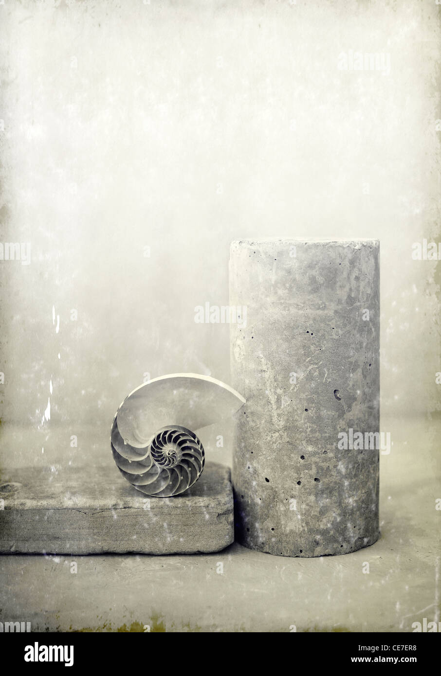 Nautilus shell with a concrete pillar and brick. - Stock Image
