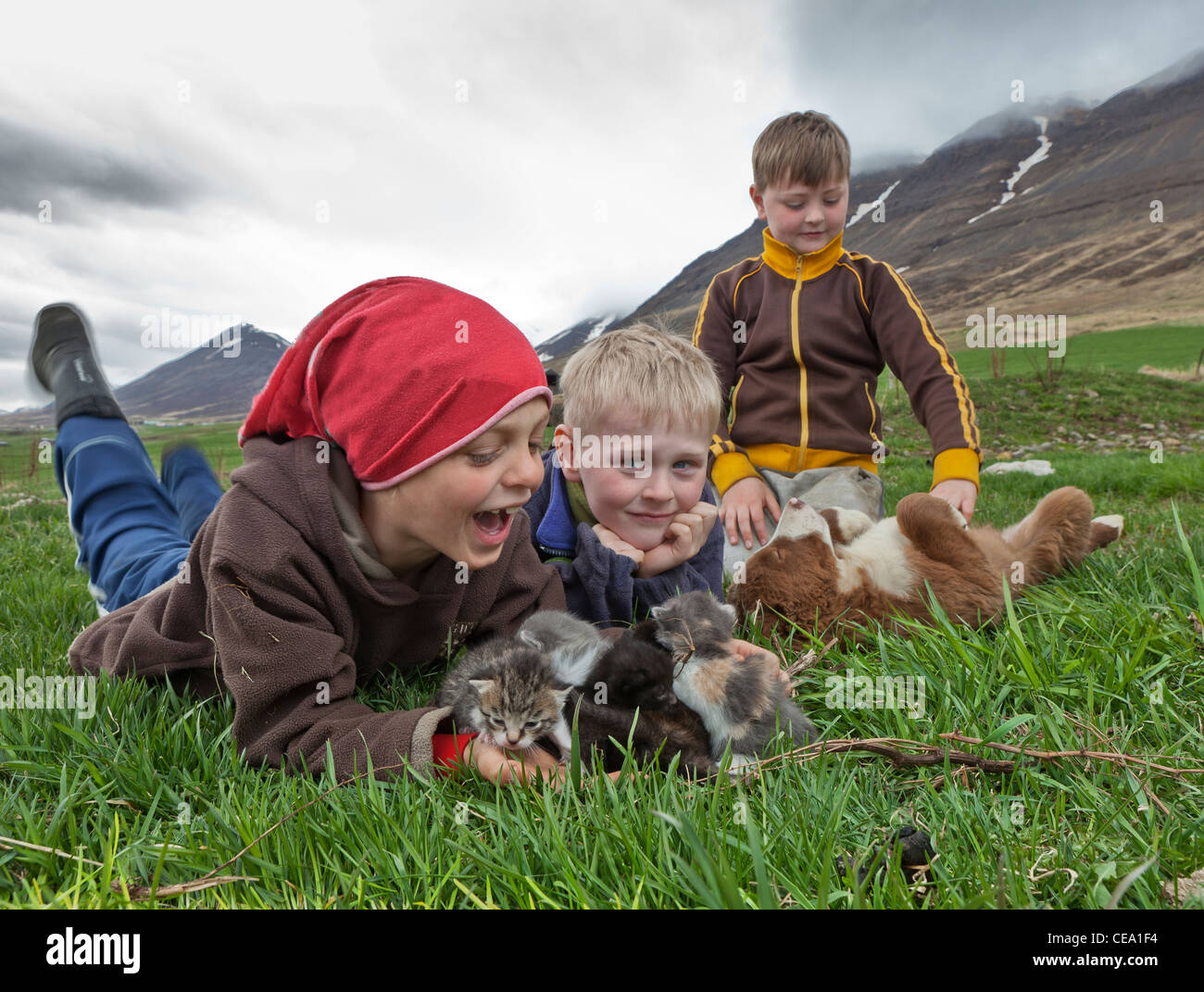 Boys with kittens and puppy on farm in Northern Iceland - Stock Image