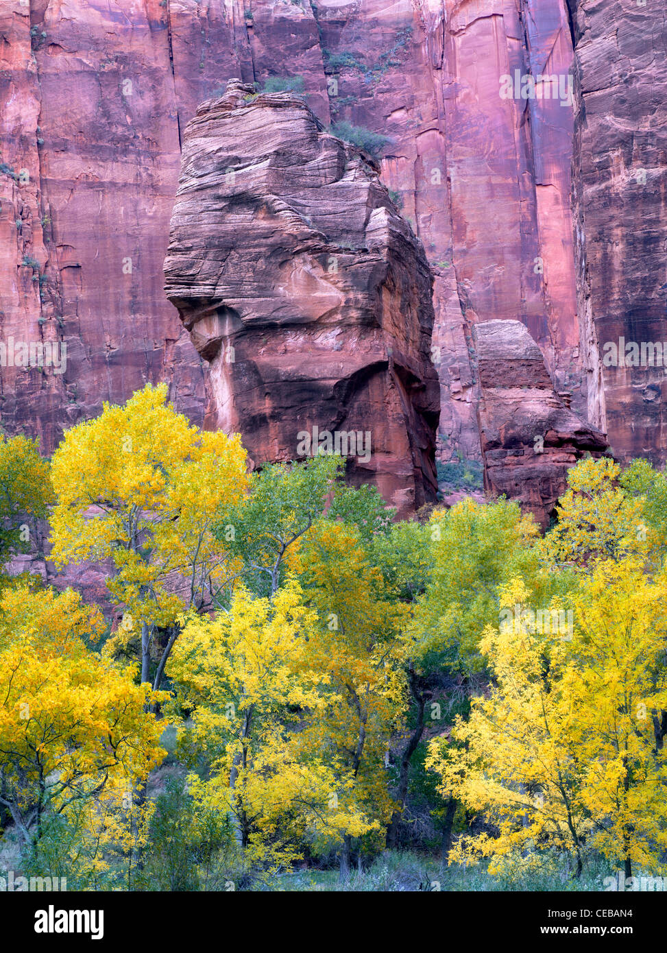 The Pulpit and fall color at the Temple of Sinawava. Zion National Park, Utah - Stock Image