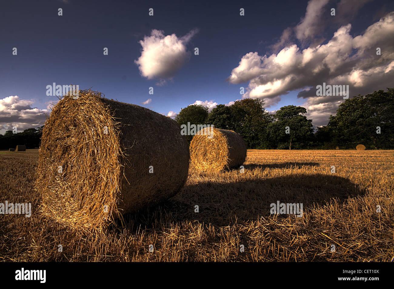 Hay Bales,Cheshire Countryside,Grappenhall,Warrington,Cheshire,WA4,2PL,WA42PL,rolls,dramatic,sky,gotonysmith,drama,balers,machine,machines,field,straw,british,GB,fodder,lush,pasture,harvest,byproduct,stacks,pits,rumination,animal,animals,making,haymaking,fodder,rick,barrack,Haylage,doing hay,or,barrack shed or barn balers silage,a bale wrapper silo endophytic fungus,gotonysmith,gotonysmith,Warringtonian,making hay,haymaking,doing hay,Buy Pictures of,Buy Images Of,Buy Pictures of,Buy Images Of
