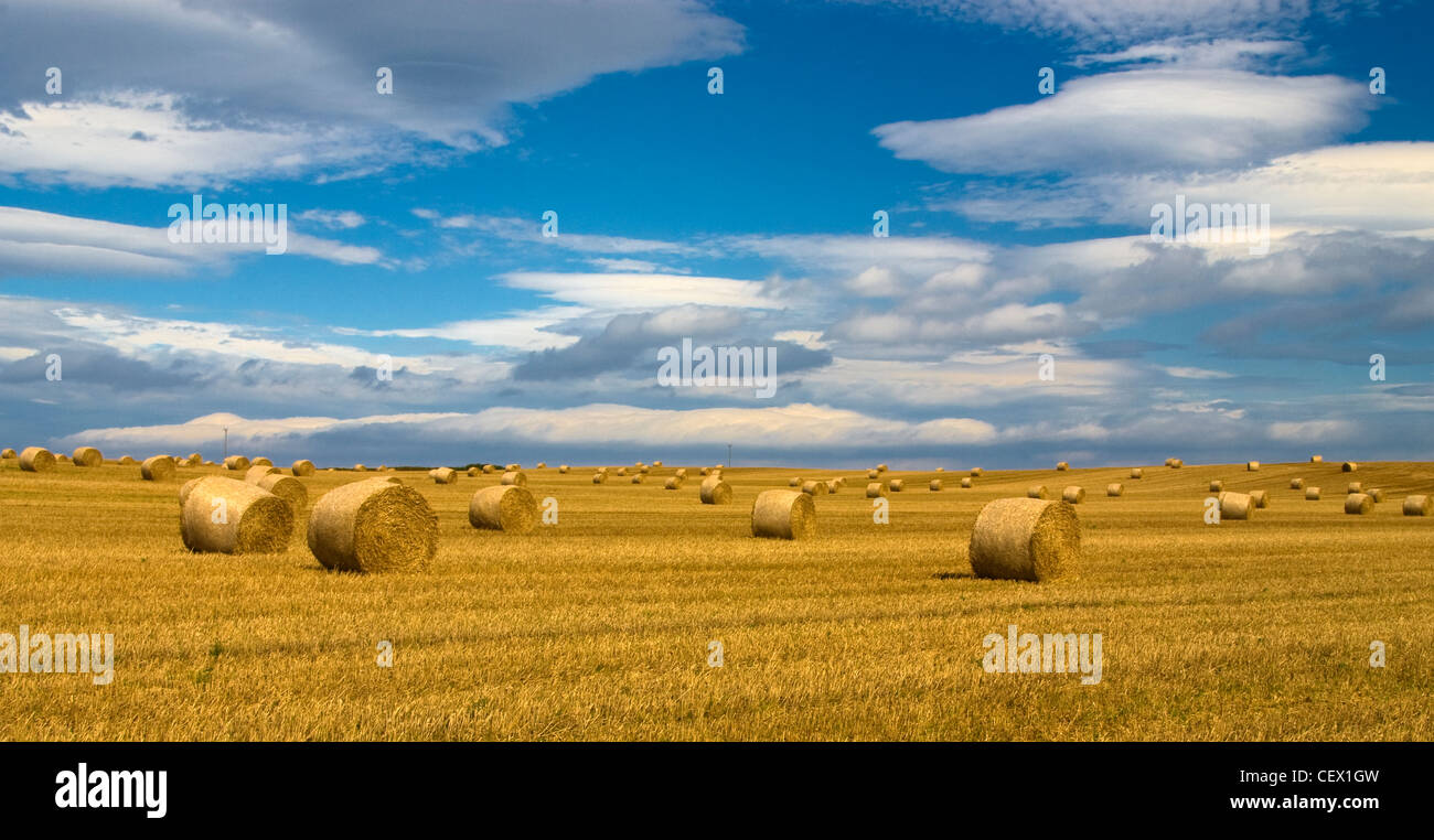 A view of straw bales after a harvest. - Stock Image