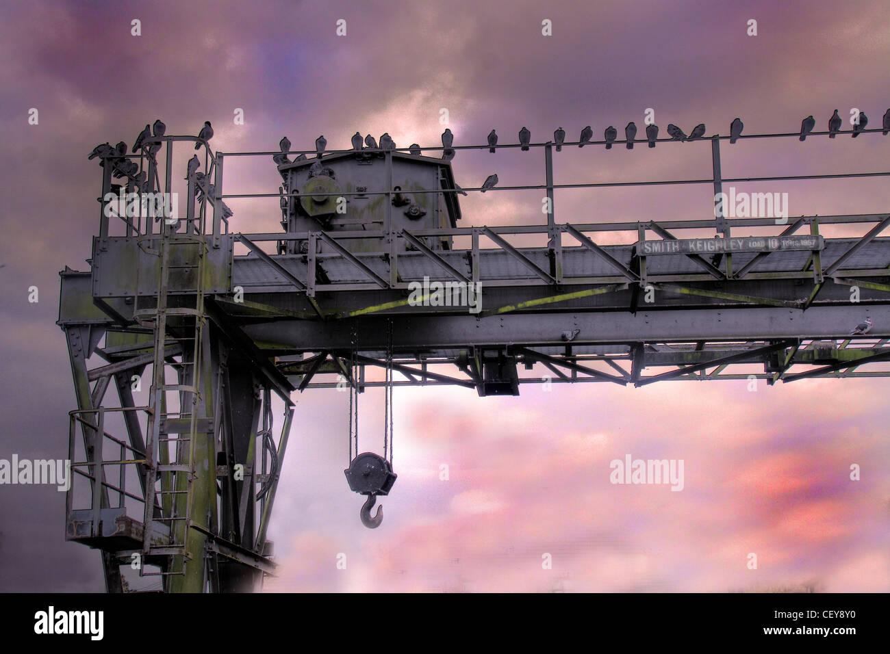 Crane over the Manchester Ship Canal at Latchford Locks,South Warrington,Cheshire,England UK birds sunset coloured sky gotonysmith,gotonysmith,Buy Pictures of,Buy Images Of
