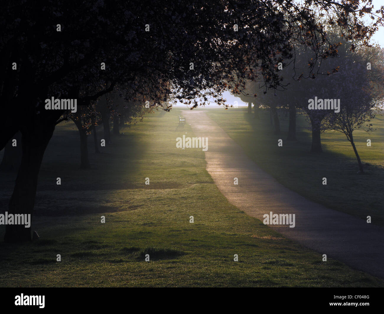 Sun through trees on a path early on a misty morning in autumn in the War Memorial park, Coventry UK. Stock Photo