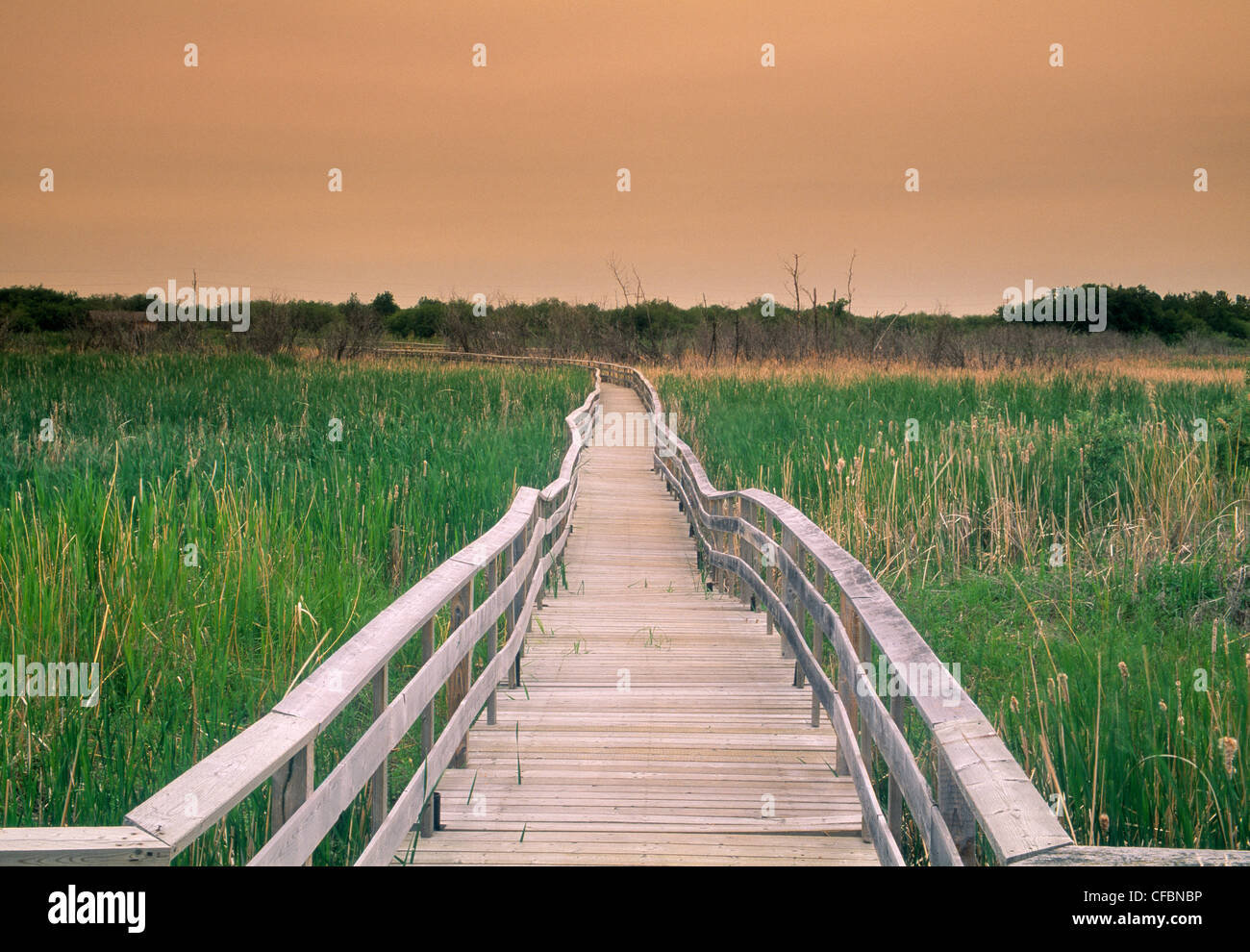 Boardwalk trail in Spruce Woods Provincial Park, Manitoba, Canada - Stock Image