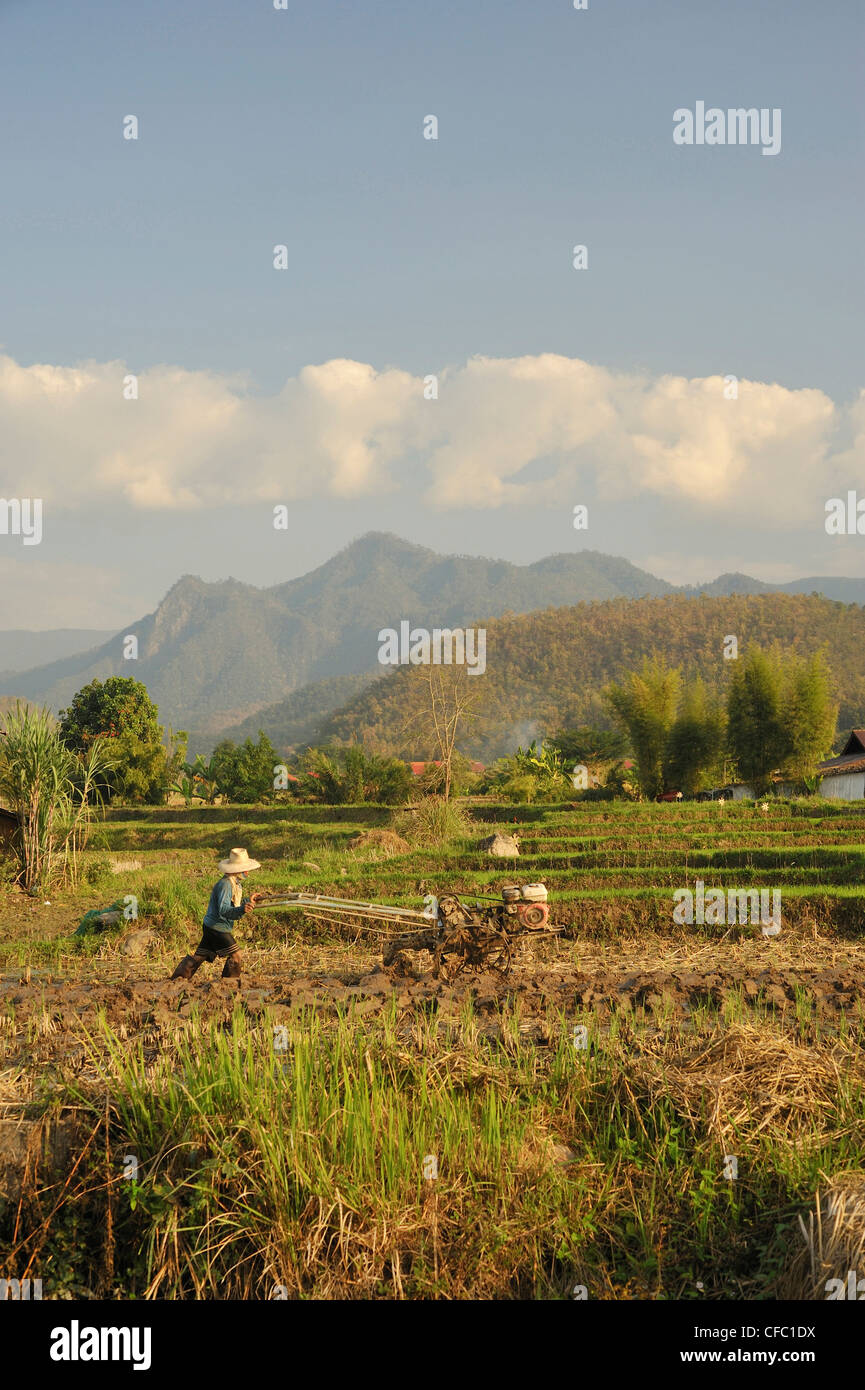 man plowing rice field, Mae Hong Son, Thailand - Stock Image