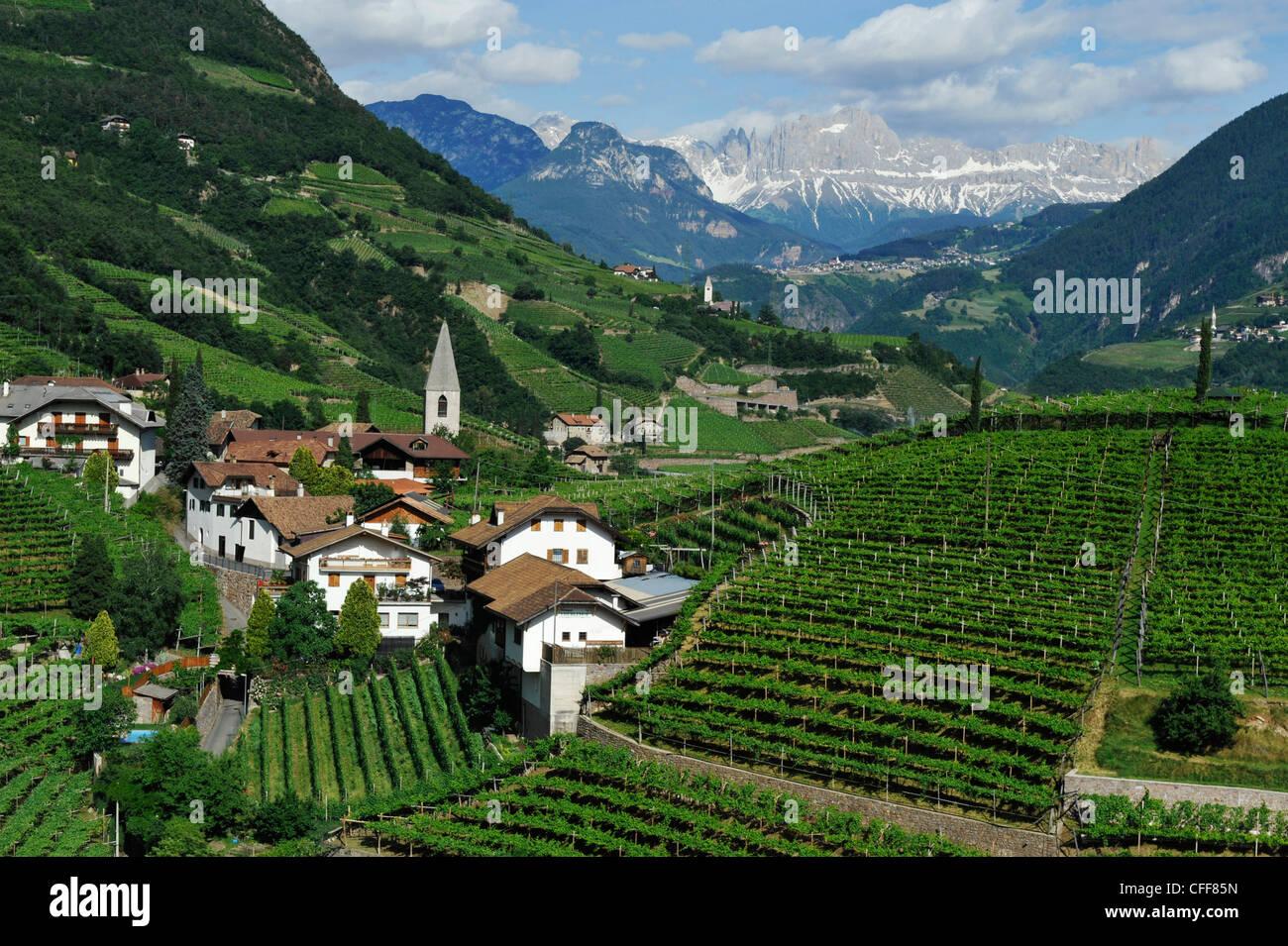 Vineyard and houses under clouded sky, Bolzano Rentsch, Dolomites, South Tyrol, Alto Adige, Italy, Europe - Stock Image