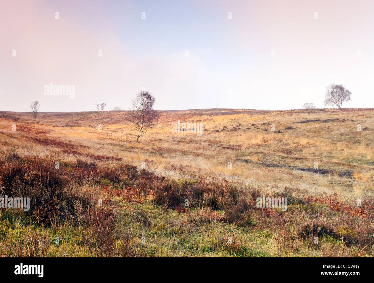 Morning Mist on Cannock Chase AONB (area of outstanding natural beauty) in Staffordshire Midlands England UK - Stock Image
