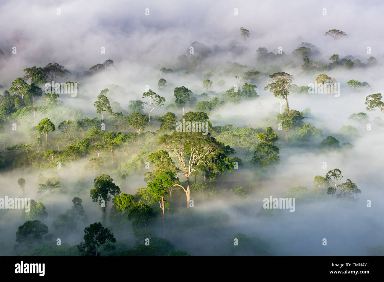 Mist and low cloud hanging over Lowland Dipterocarp Rainforest, just after sunrise. Heart of Danum Valley, Sabah, Stock Photo