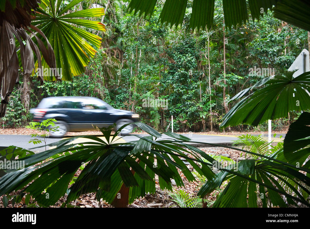Car driving on rainforest road in Daintree National Park, Queensland, Australia - Stock Image