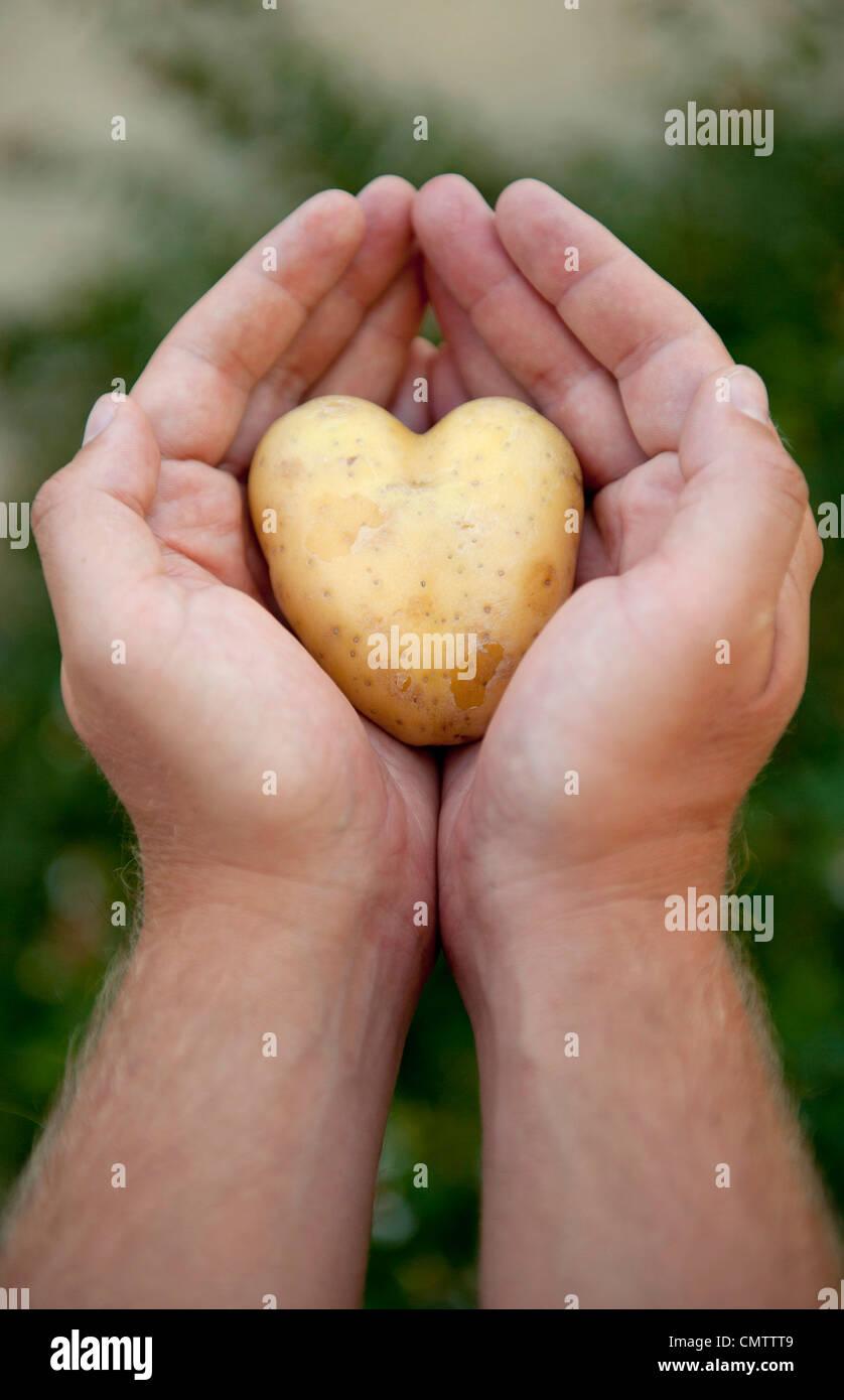 Close-up of human hand holding potato - Stock Image