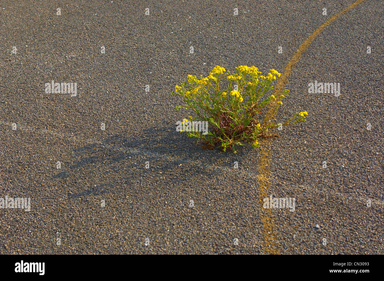 Plant growing through old school yard - Stock Image