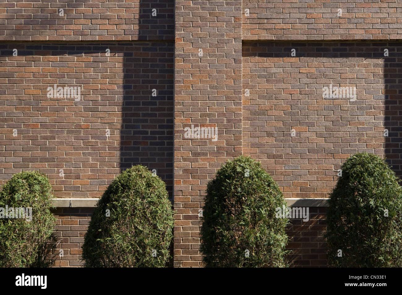 Bushes and brick wall - Stock Image