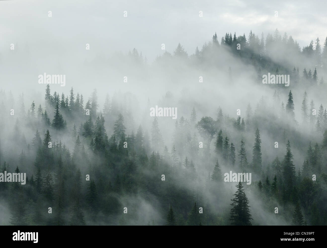 Mist over forest, Dzembronya area, Carpathian Mountains, Ukraine - Stock Image
