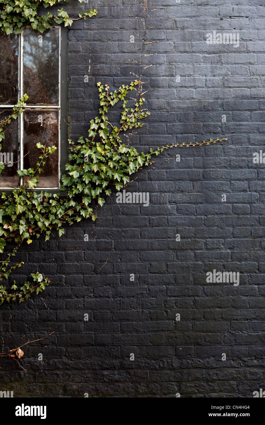 Vine on brick wall - Stock Image