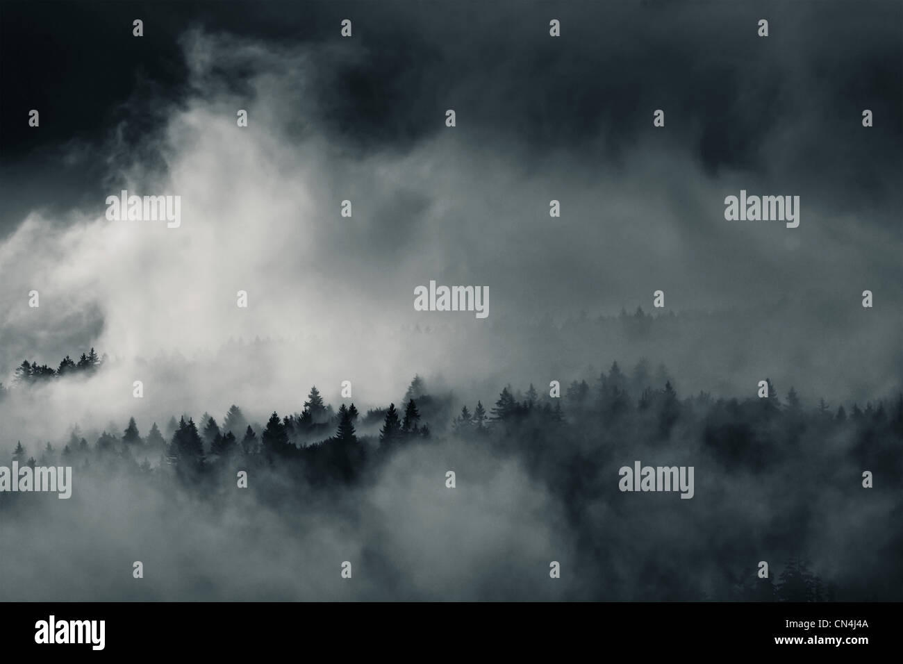 Forest in mist, Bayerisch Eisenstein, Bavaria, Germany - Stock Image