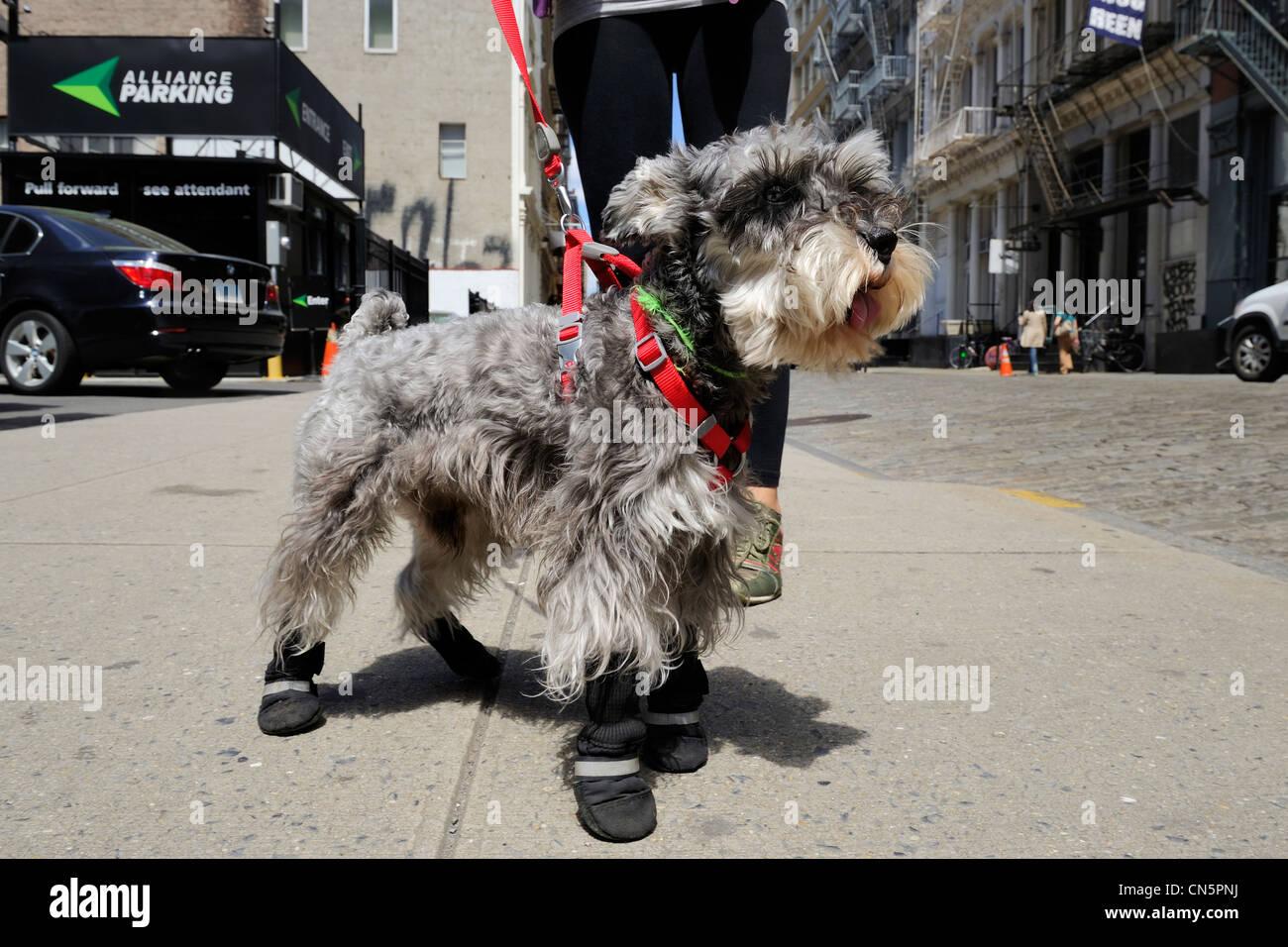 united states new york city manhattan soho new yorker fashion