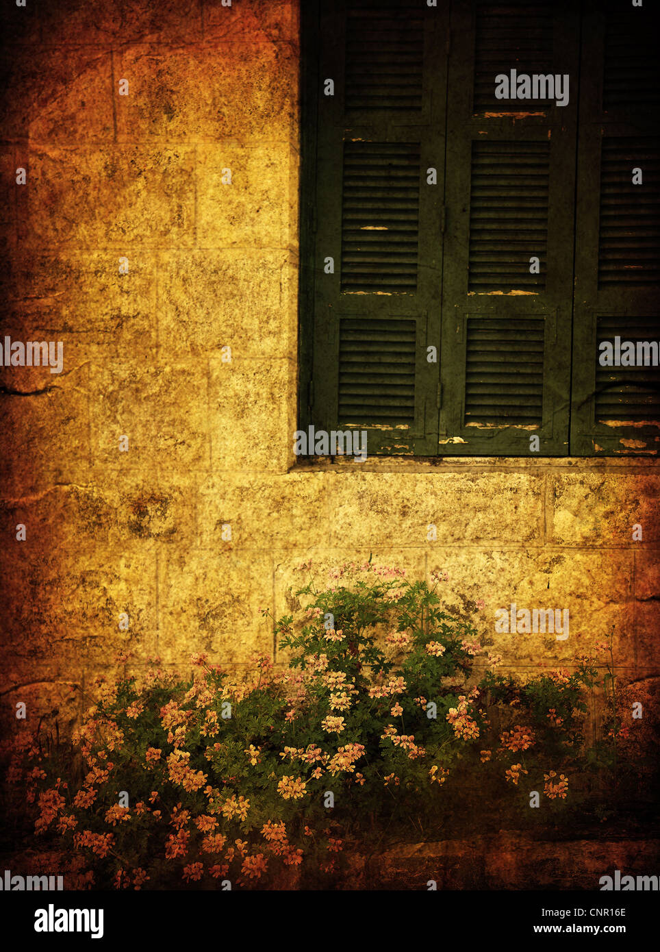 Old house grunge photo of window & flowers - Stock Image