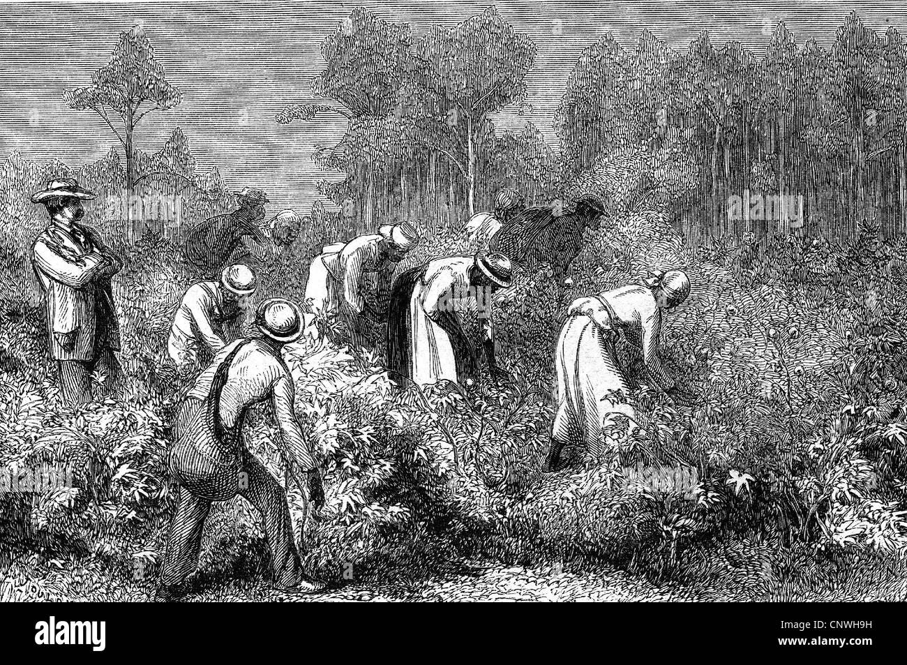 the nature and impact of slavery throughout colonial and antebellum america Slavery in early america: characteristics  the characteristics of slavery in early colonial america were  slavery in early america: characteristics & opposition.