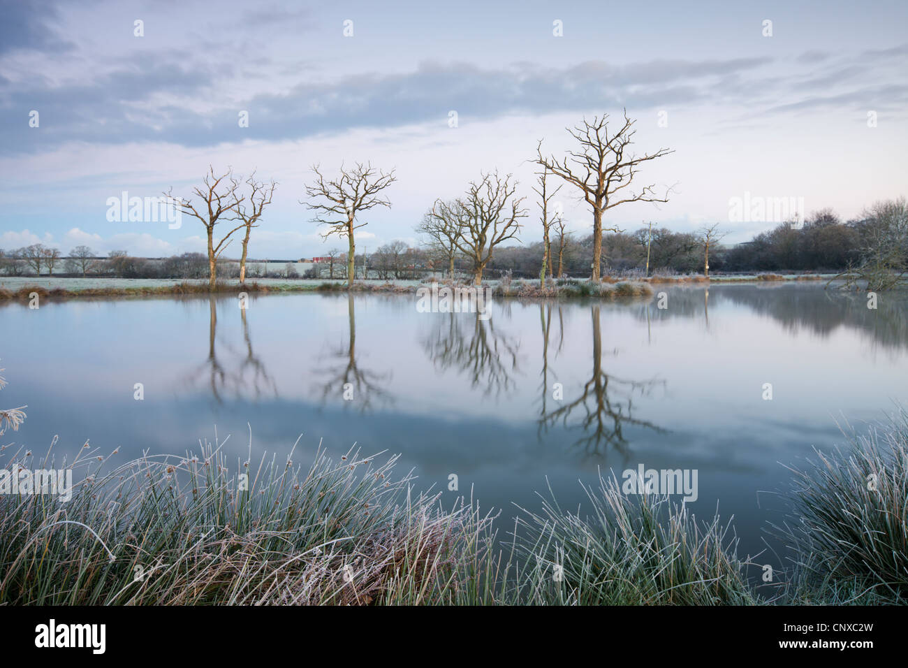 Frosty winter scenes beside a still lake, Morchard Road, Devon, England. Winter (November) 2010. - Stock Image