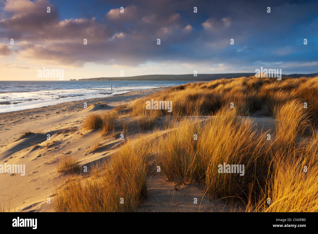 Windswept sand dunes on the beach at Studland Bay, with views towards Old Harry Rocks, Dorset, England. Winter (February) - Stock Image