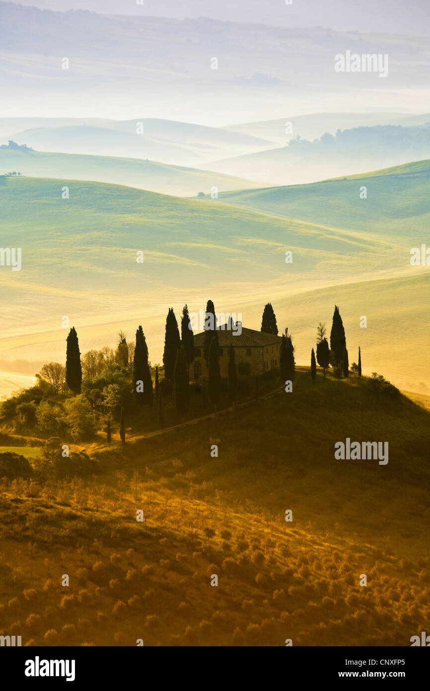 hilly landscape in the morning, Italy, Tuscany - Stock Image