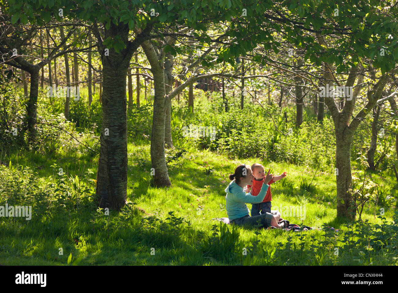 Young mother and inquisitive one year old toddler son in a woodland, Cutteridge Wood, Devon, England. Spring (April) - Stock Image
