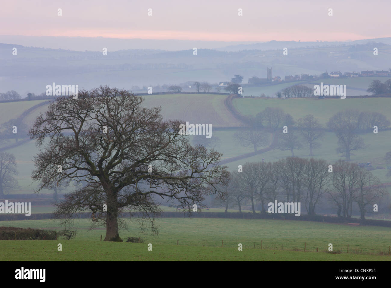 Mist covered rolling countryside near Coleford, Devon, England. Winter (January) 2012. - Stock Image