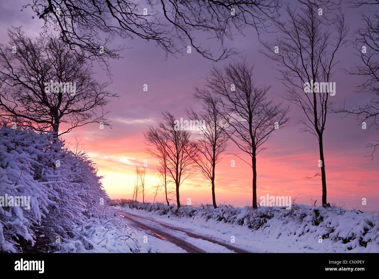Snow covered country lane at dawn, Exmoor National Park, Somerset, England. Winter (January) 2012. - Stock Image