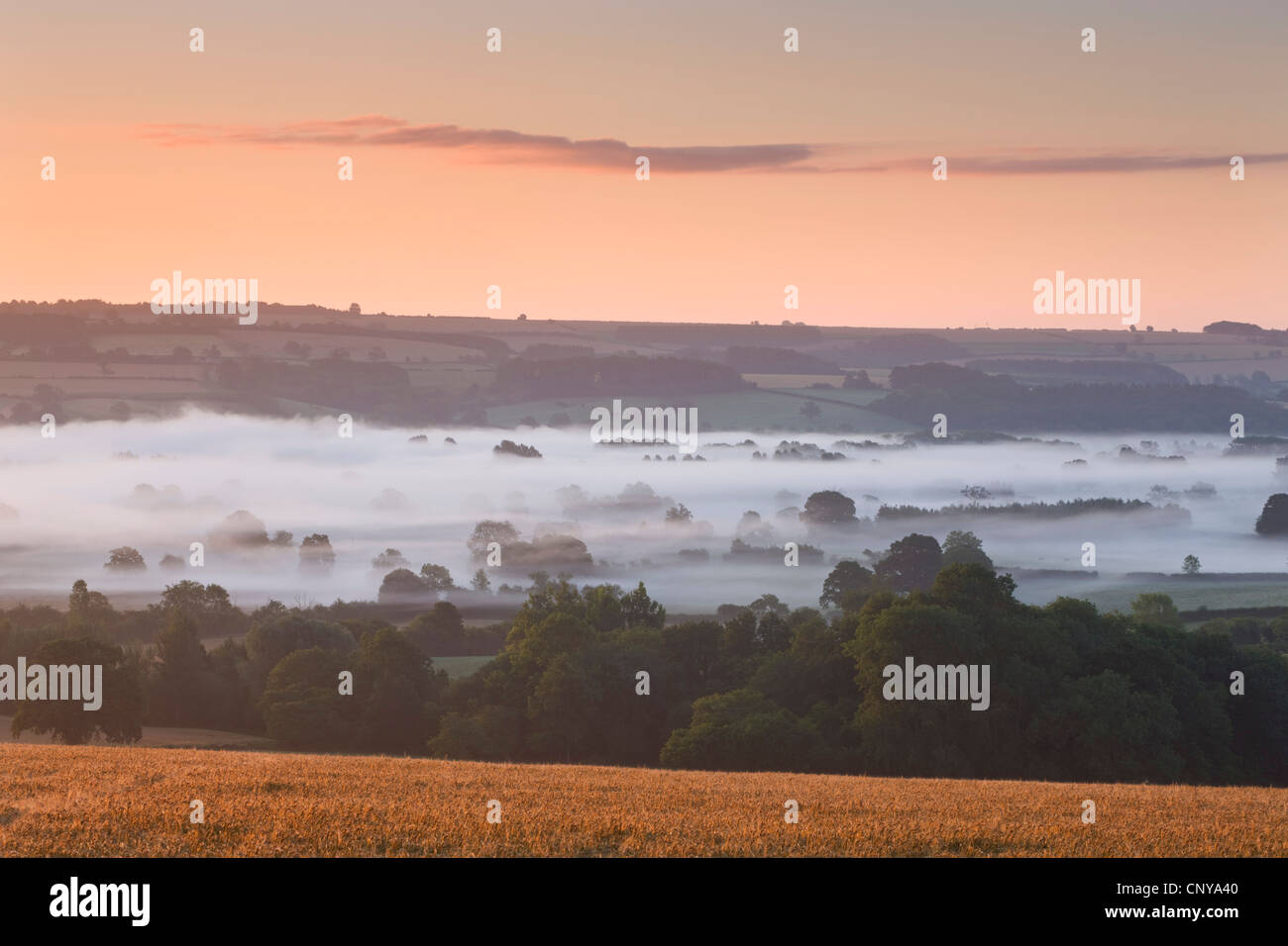 Mist covered Cotswolds countryside near Bourton on the Water, Gloucestershire, England. Summer 2011 - Stock Image