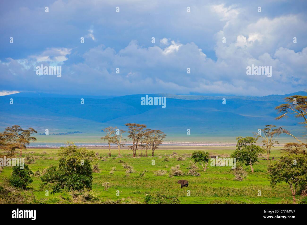 landscape of Ngorongoro Crater, Tanzania, Ngorongoro NP - Stock Image